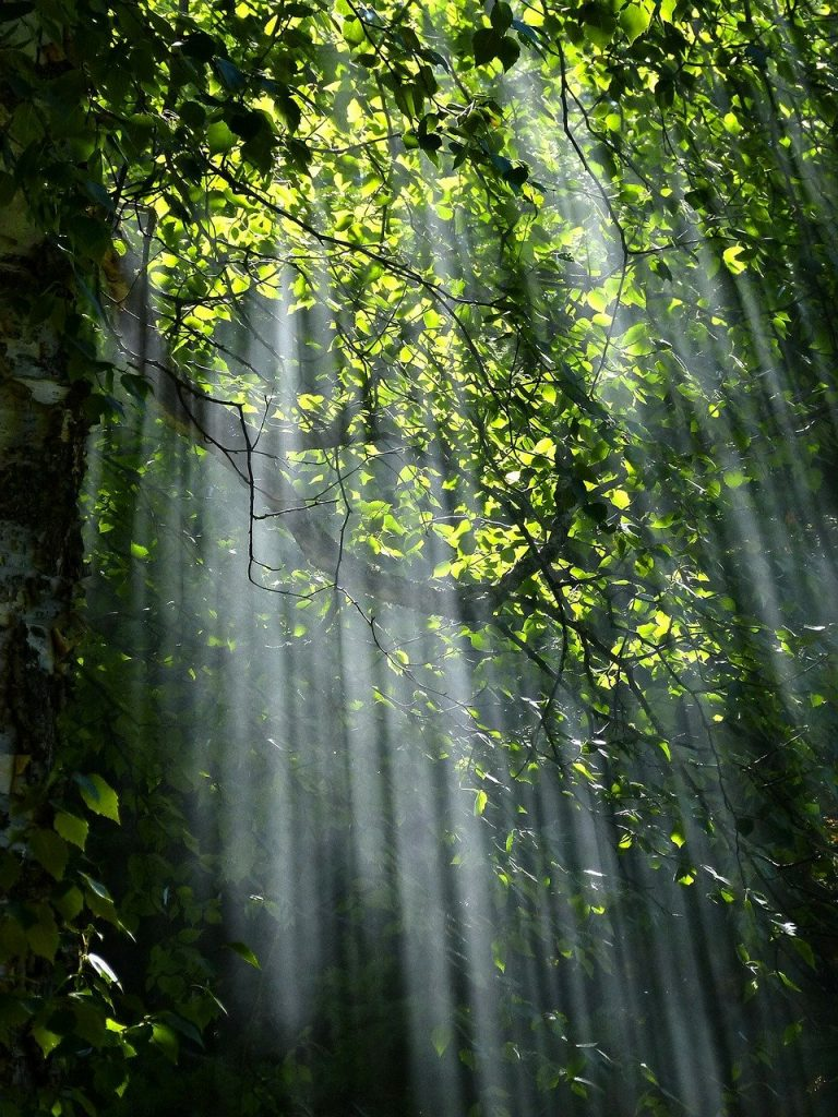 forest, trees, sunlight